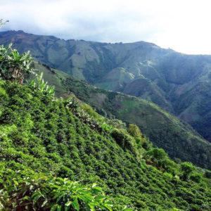 Palmitas La Aldea Morron Coffee
