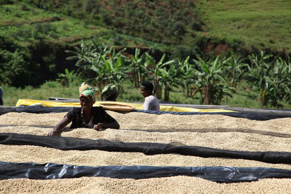 Buf Remera Coffee - Ceresia Coffee Roasters