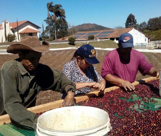Fazenda Samambaia Coffee